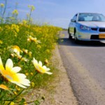 春のドライブデートでおすすめなスポットは?お花見スポットが人気?