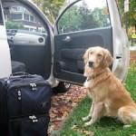 犬を車に乗せてドライブする際の注意点やおすすめなグッズは?