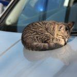 ボンネットの猫の対策!車のエンジンルームに入れない方法やグッズは?